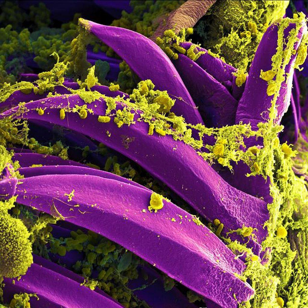 Períodos de la Biología: Biología Molecular.