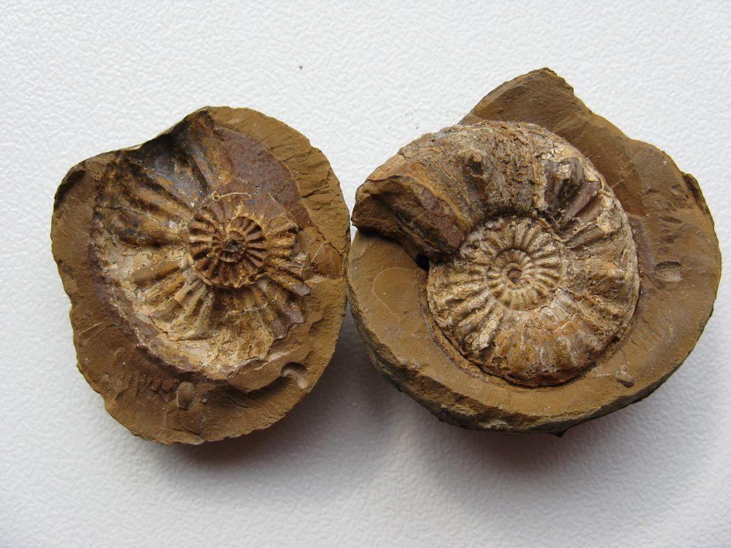 Fósiles en los que se usa la Datación Radiactiva.