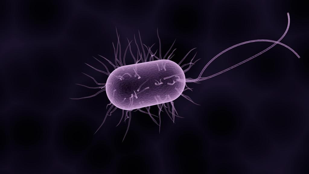 Células procariotas.