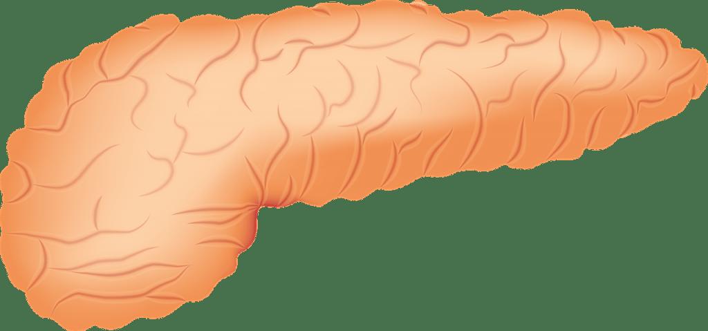Glándulas y sus hormonas: páncreas.